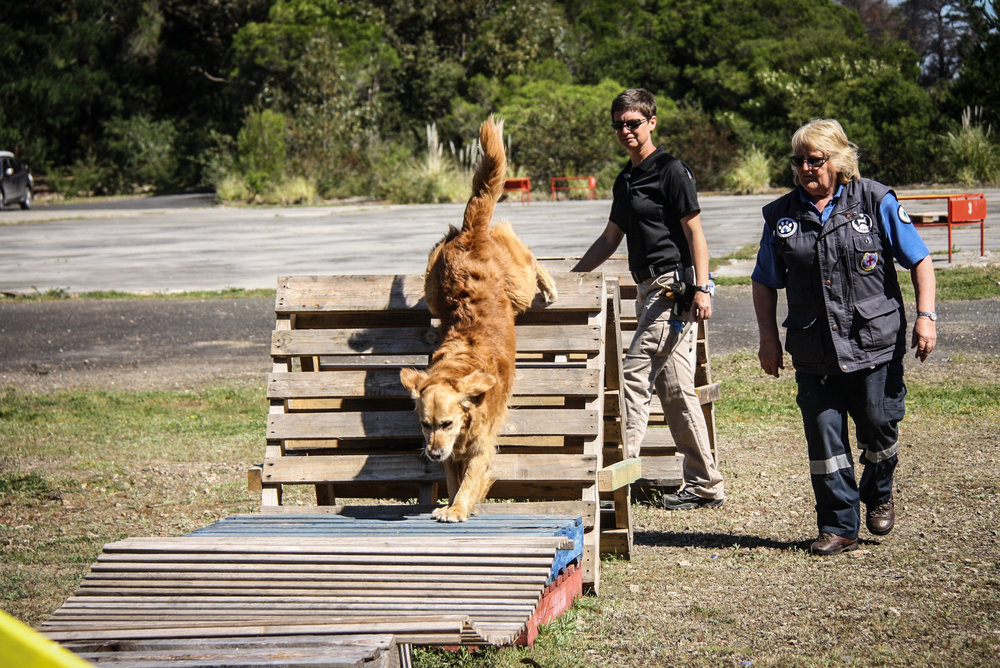 K9 Will (SARDA) eagerly completes the agility course with handler Julie Cowan and instructor Tracy Darling