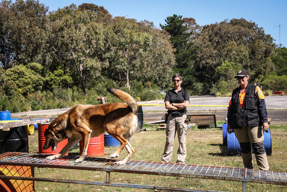 Tracy observes K9 Boof with handler Adele Jago (Search Dogs Sydney) as they perform a series of agility elements