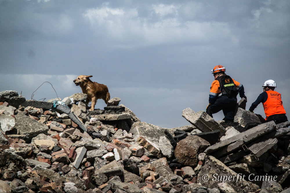 Instructor Eric Darling and handler Julie Cowan with K9 Will (SARDA) navigate the rubble in high winds