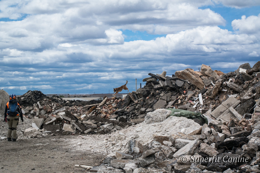 Handler Adele Jago  watches over K9 Boof (Search Dogs Sydney) as he traverses the rubble