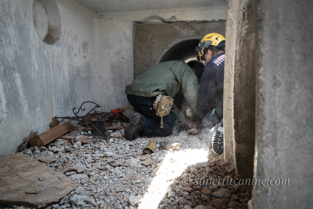 Students assess and respond to an injured search dog (mannequin) in a confined space during a direct-threat scenario.