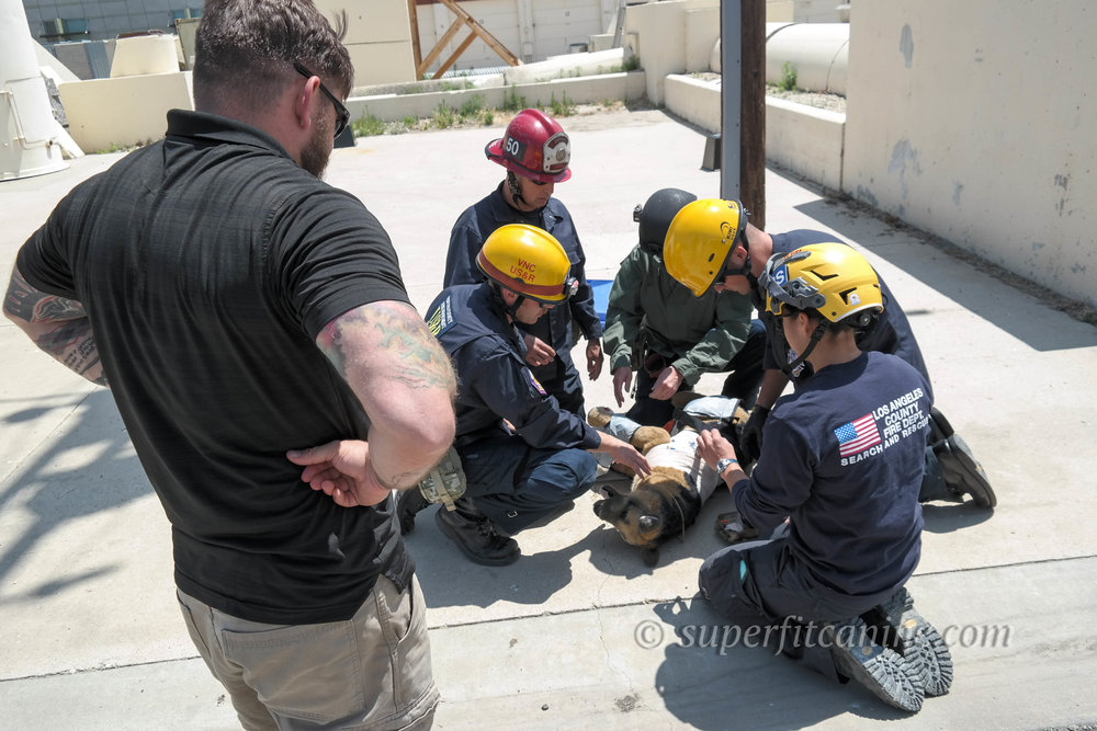 Students perform a secondary assessment after evacuating their injured working K9 (mannequin) from a direct-threat scenario.