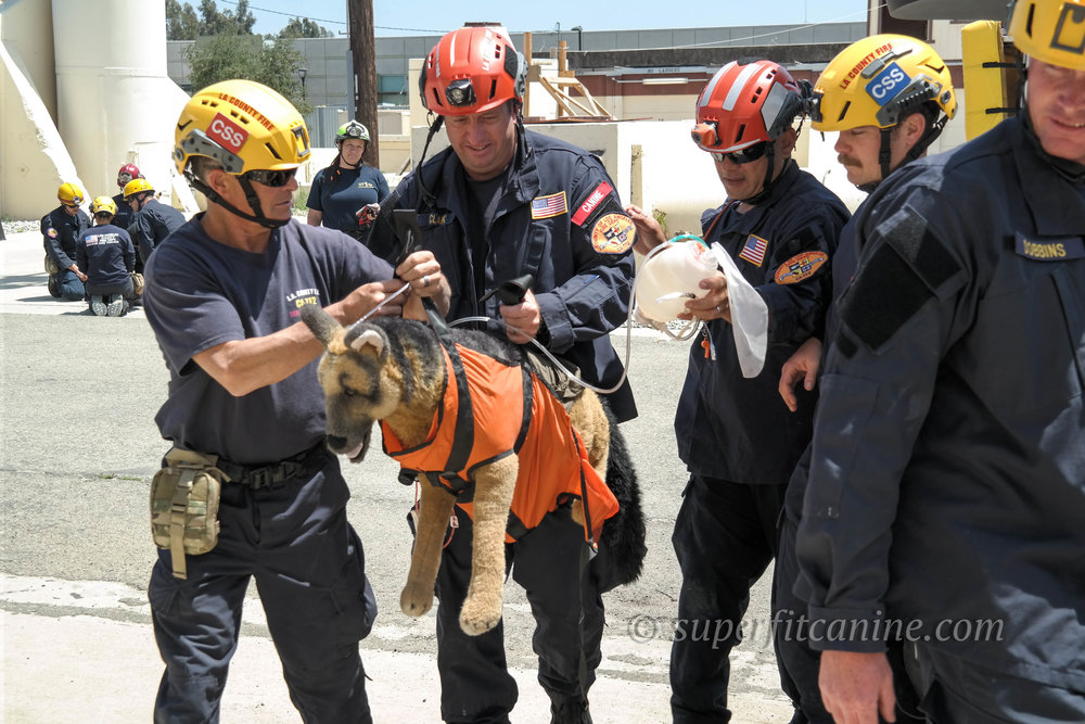 - Our disaster K9 workshop is being held in conjunction with our K9 emergency casualty care course. Sign up for both and save!