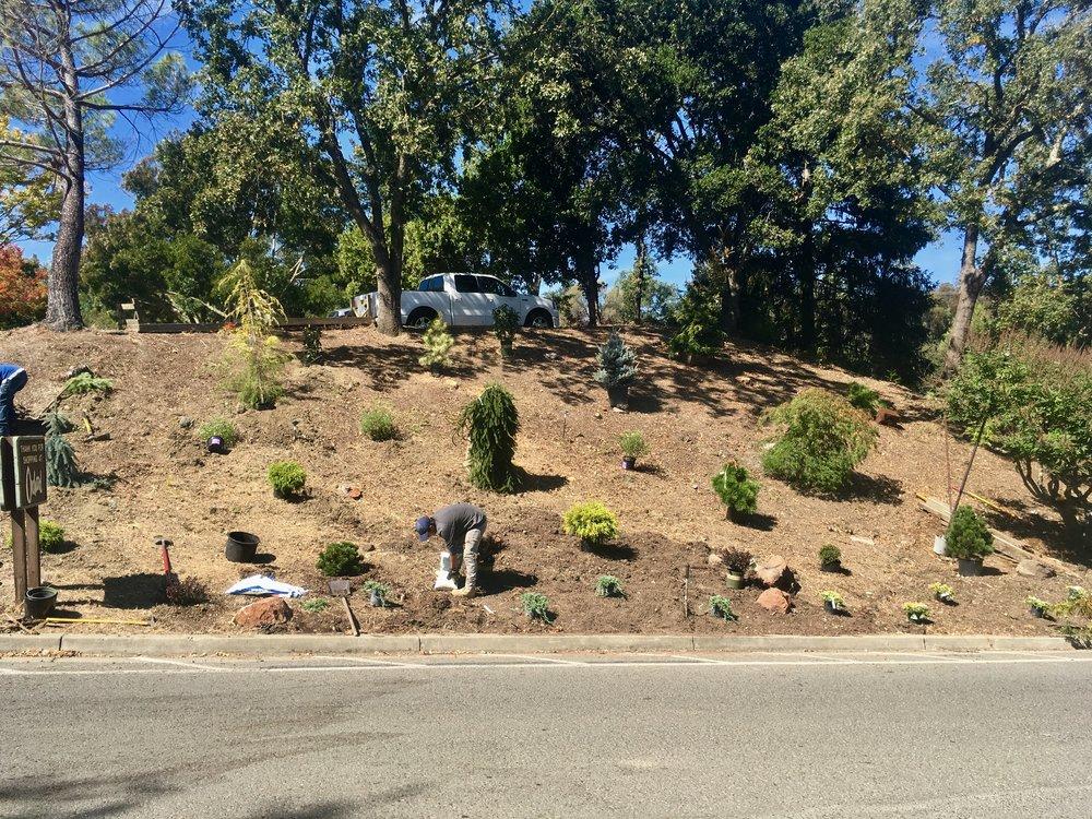 hillside4.jpg