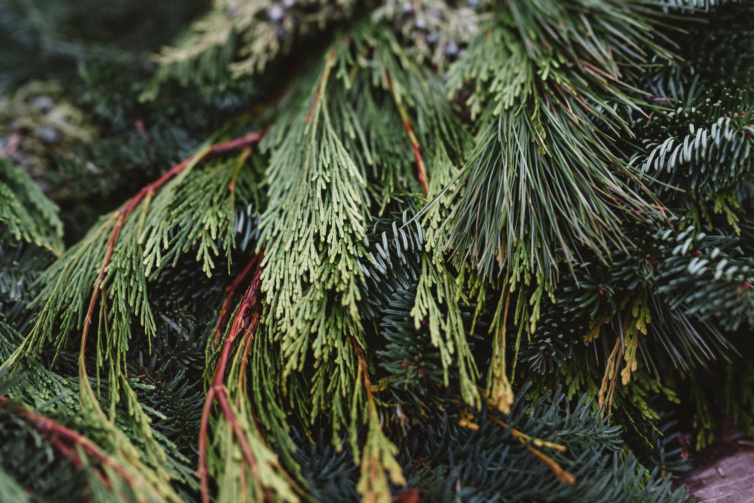 keeping your holiday greenery fresh - Fresh Christmas Greenery
