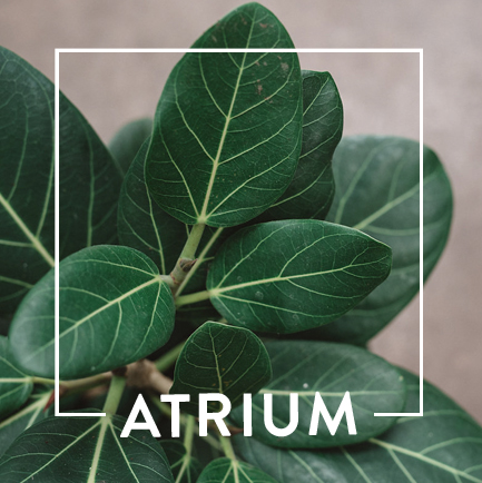 website-dept-cards-atrium.jpg