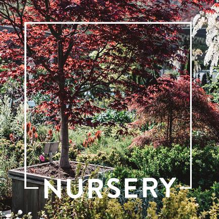website-dept-cards-nursery.jpg