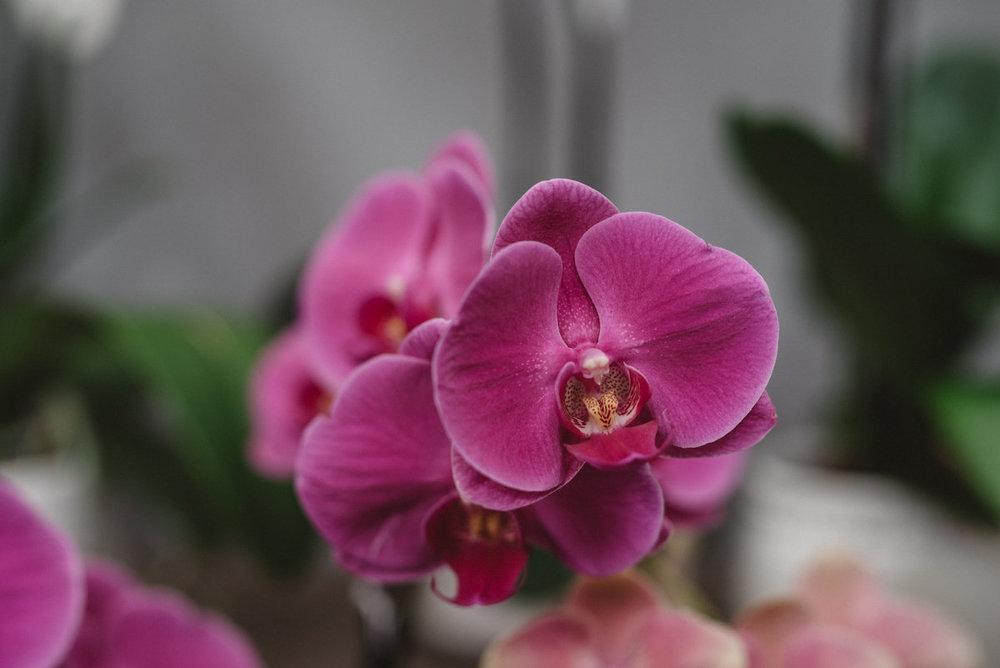 Gorgeous orchids in the Atrium!
