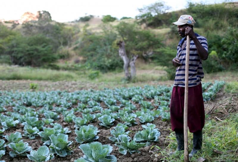 farmer 1.jpg