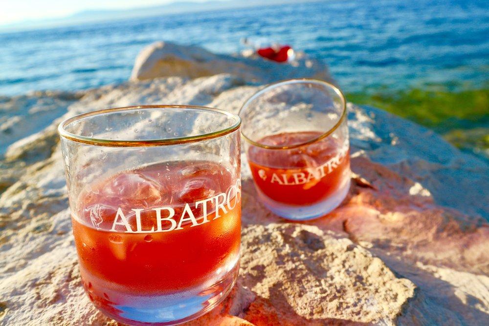 Albatross on the rocks