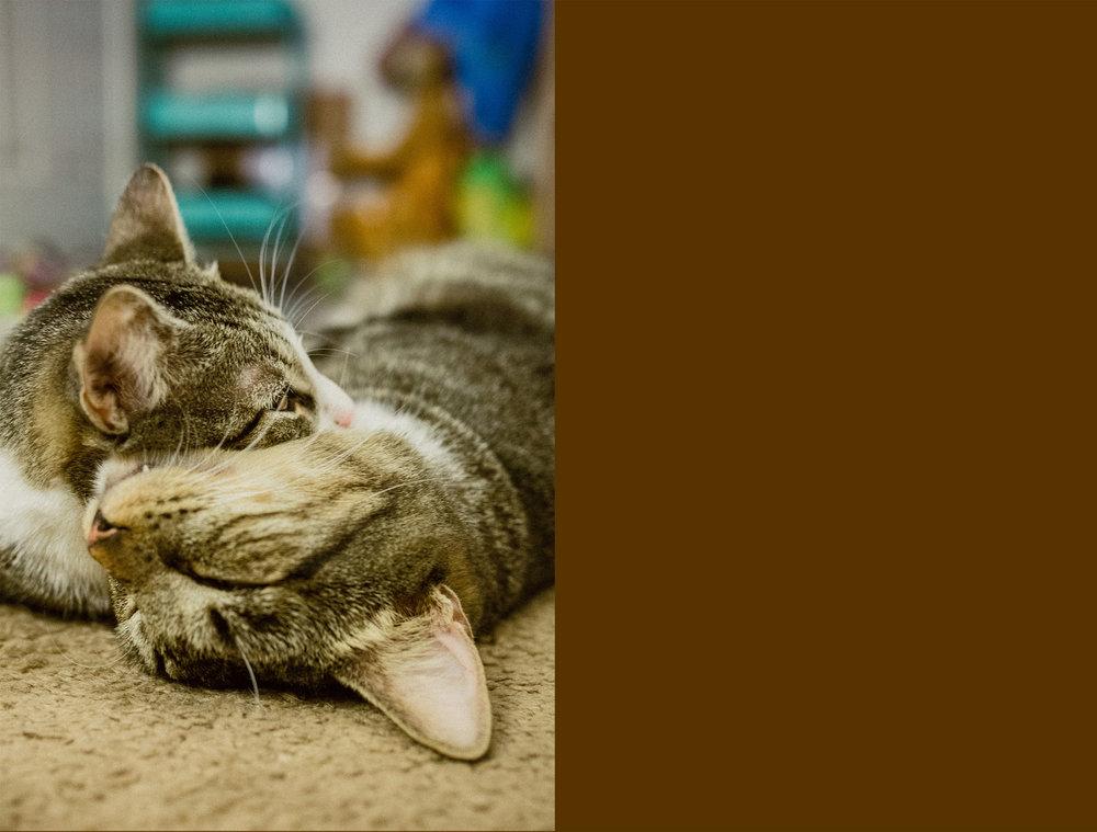 August 19: Catnap.