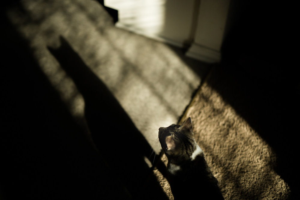October 20: Batman in the shadows. Cat in the light. Probably not what Commissioner Gordon had in mind.