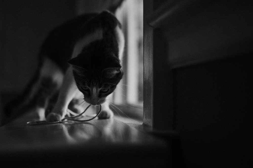 September 13: One tiny piece of string on the windowsill. One giant game for little Miss Naughty.