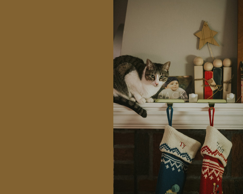 December 7: Millie inserted herself into our holiday decor at every opportunity.