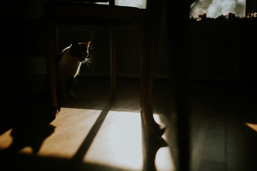 January 27: Caturday shadow play.