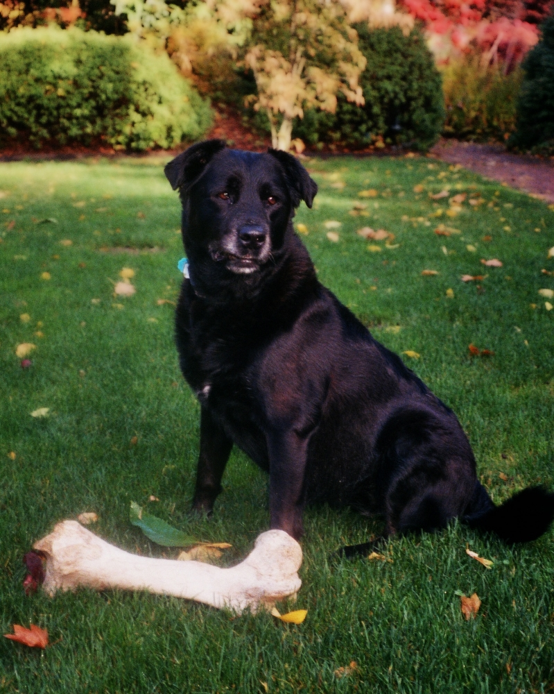 May's Big Bone.jpg