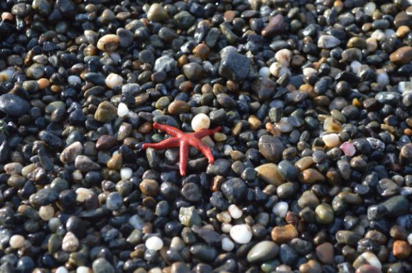 star-fish-agate