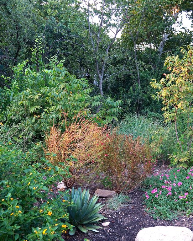 Above: An AFTER photo of that same area, after a TOTAL REFRESH, that included a bunch of lovely native plantings – and something to look at during every season.