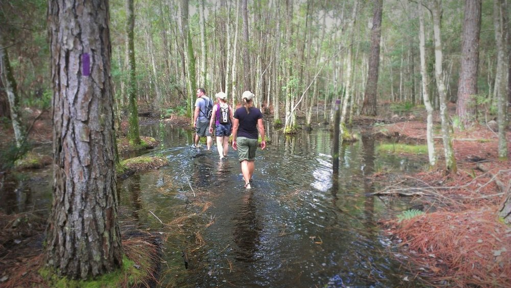 Brooker Creek Preserve in Tarpon Springs, Florida