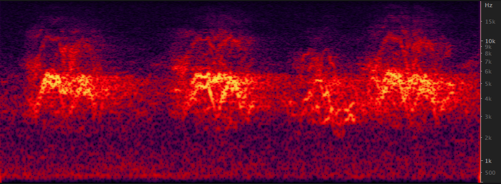 Spectrogram (time on the X (horizontal), frequency i.e. pitch on the Y (vertical) axis). Bluer traces are quiet; yellow traces are the loudest.
