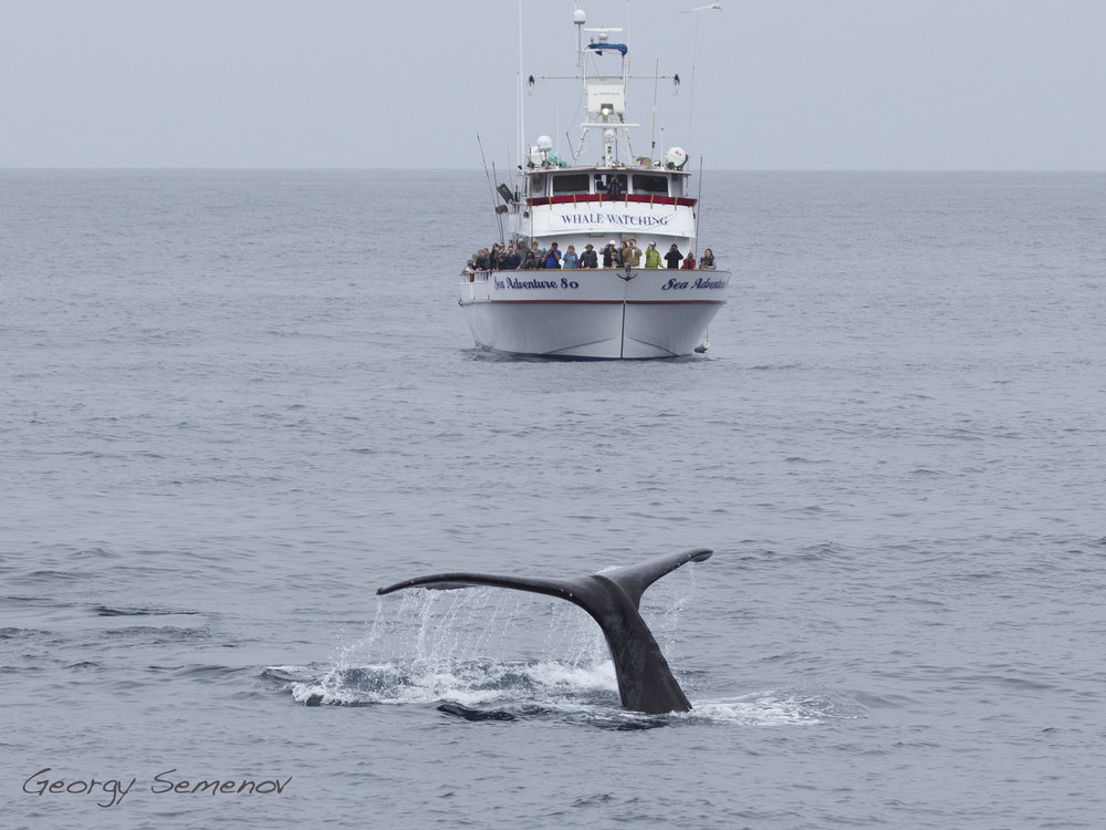 humpback-whale_26136482581_o.jpg