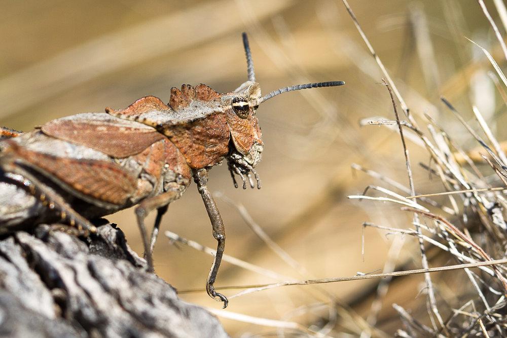 Cool Grasshopper I