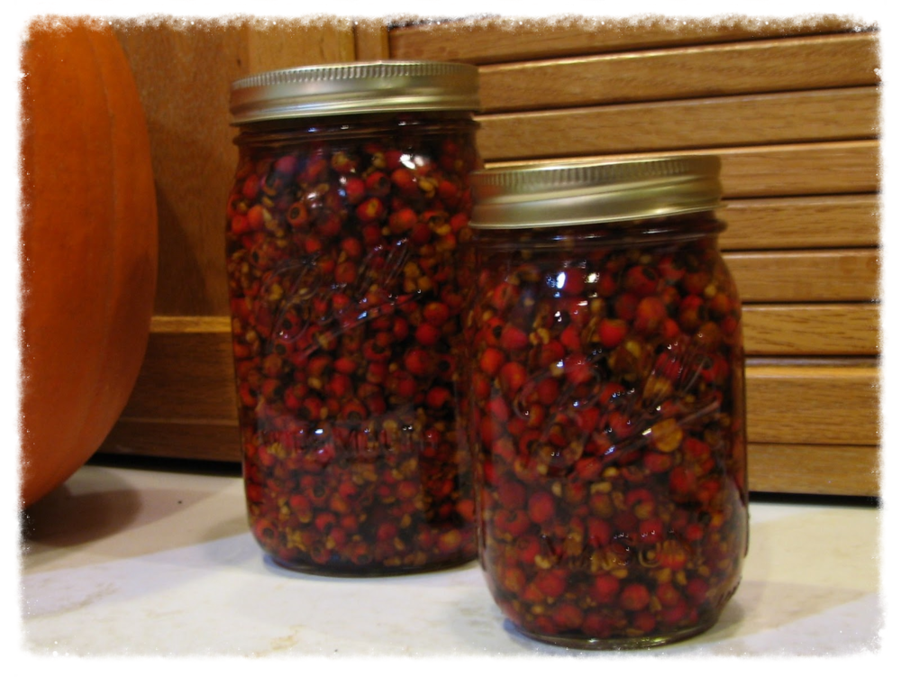 Macerating hawthorn berries; evolving medicinal tincture.