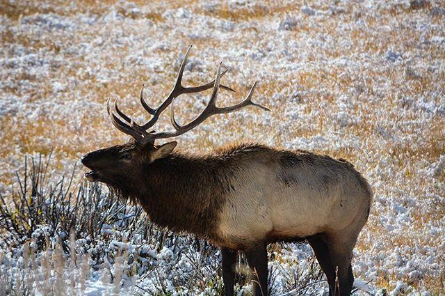 Is it September yet?  #Athlonoptics #oncagear #athensarchery #teamTMO #Montana #bull #elk #rmef  PC📸: @mitch_romig