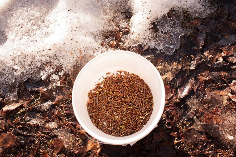 aem harvest blog_0007.jpg