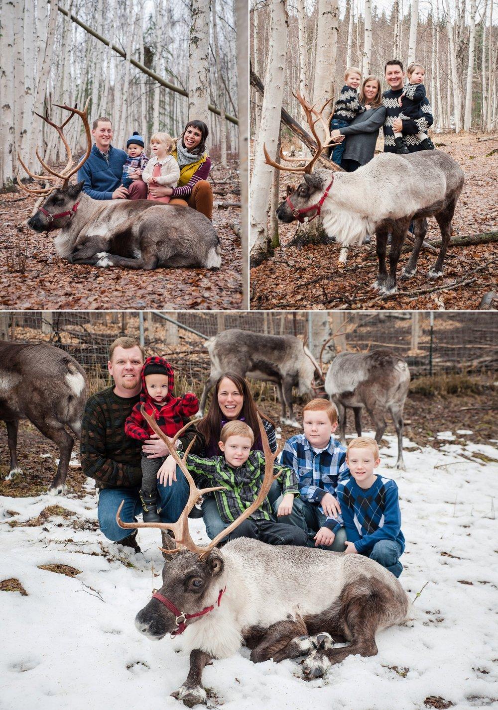 reindeer 2016_0002.jpg