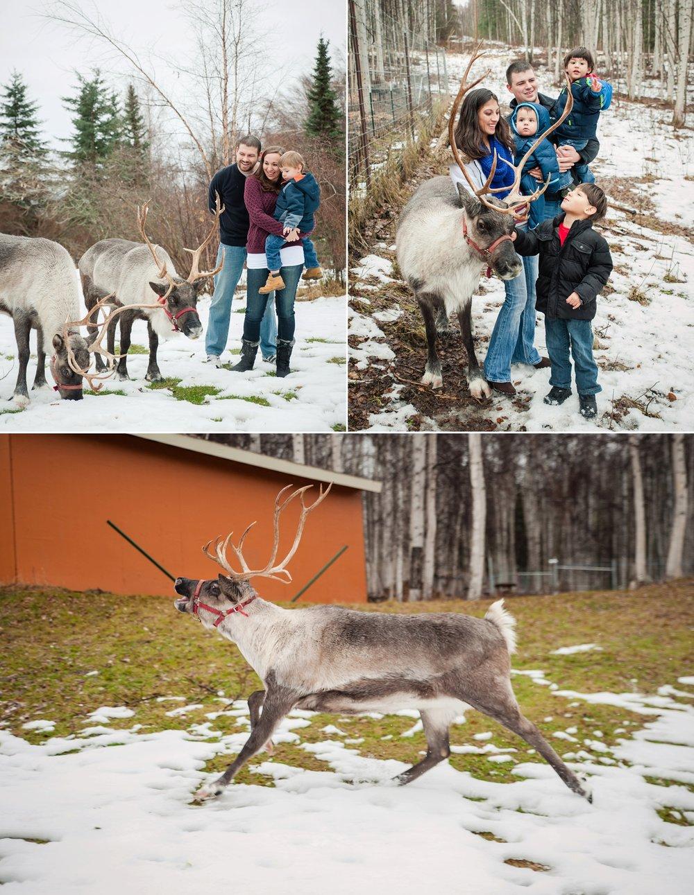 reindeer 2016_0004.jpg