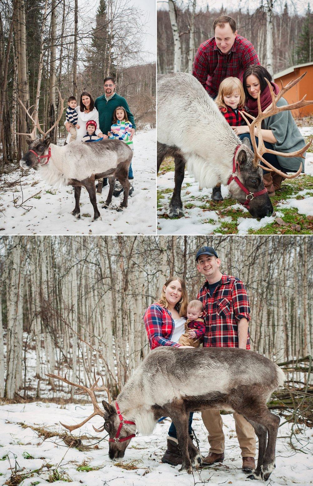 reindeer 2016_0003.jpg