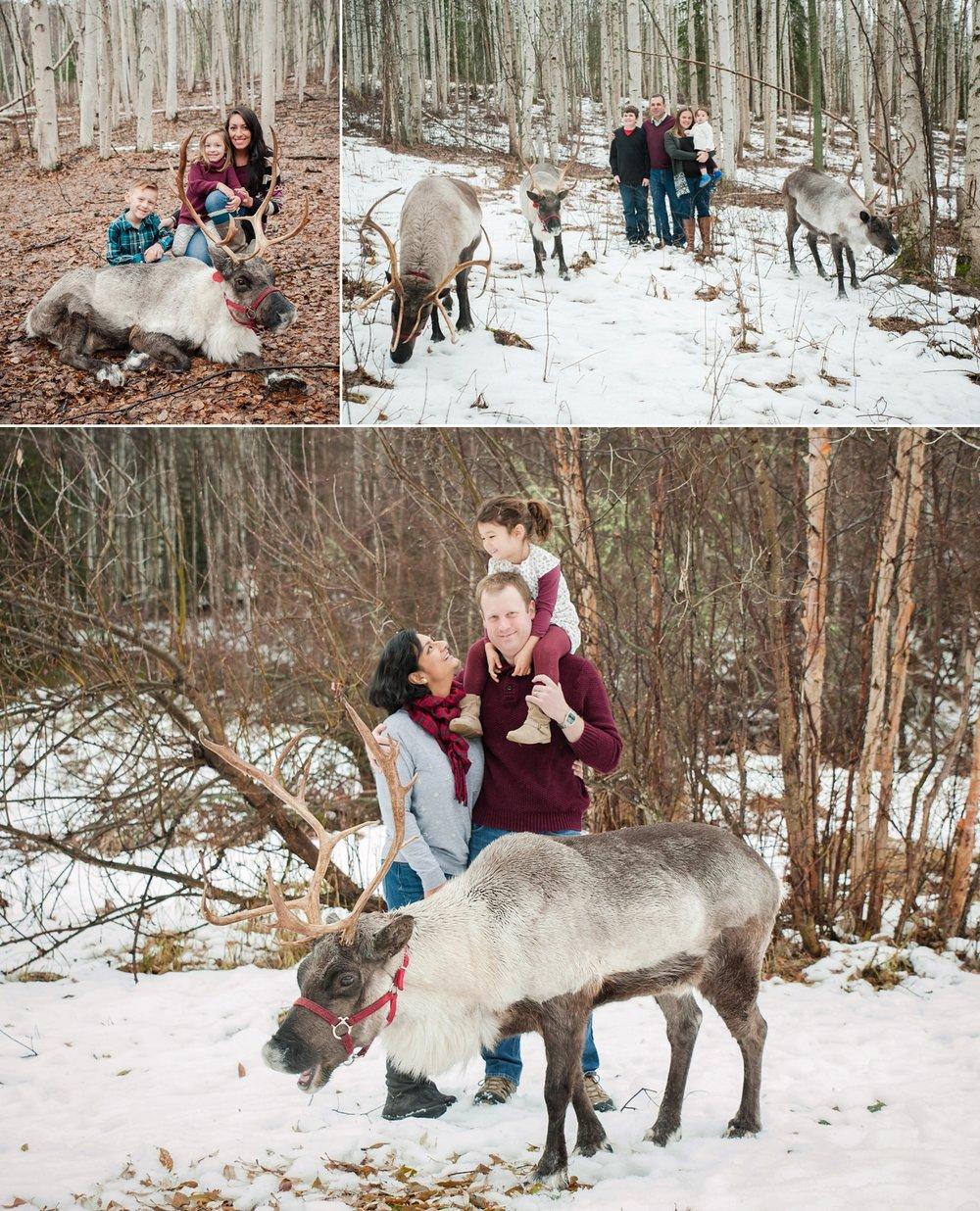 reindeer 2016_0005.jpg
