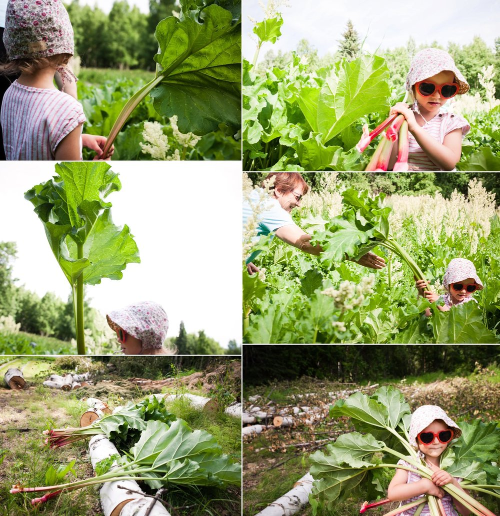 rhubarb_0002.jpg