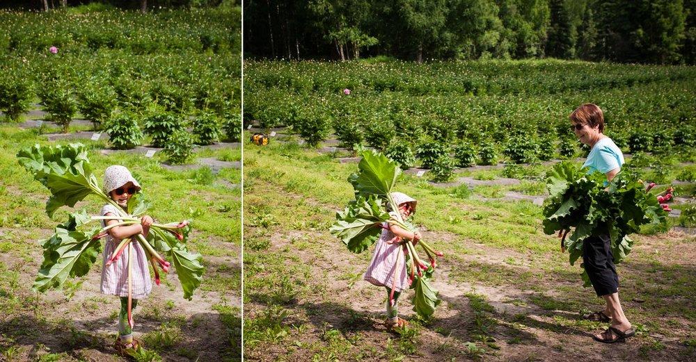 rhubarb_0003.jpg