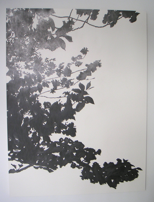 "Sakura, 2005 Pencil on clayboard panel 40"" x 60"" SOLD"
