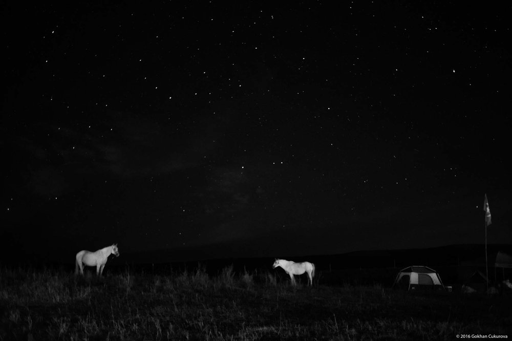 Horses at in dark, under the stars.