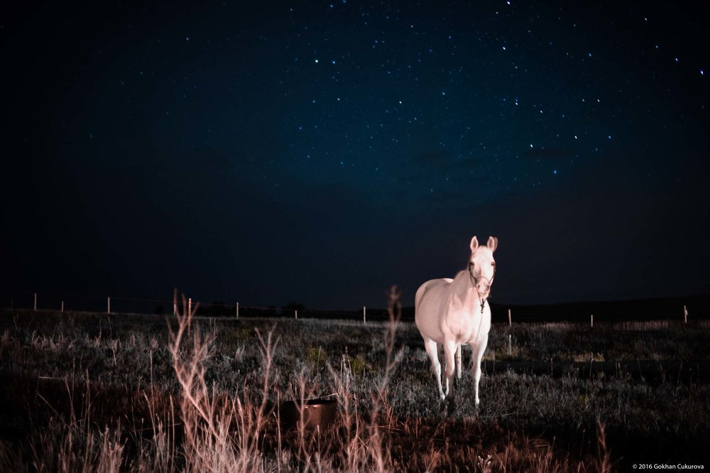 Headlights from a pickup truck allowed me focus on this horse