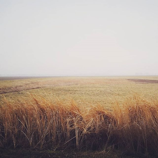 Peaceful piece of land... Solitude. #StElmo #illinois  #americantrucker #lifeontheroad  #everydayruralamerica #documentaryphotography