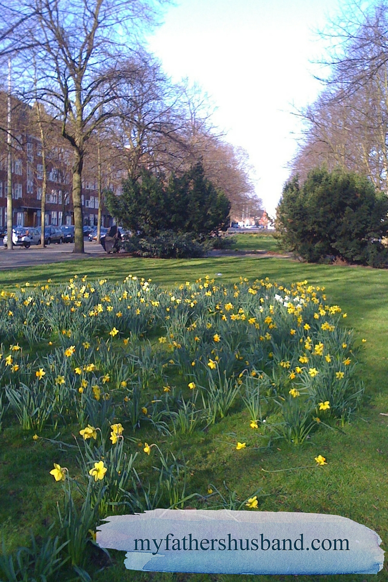 Daffodils in bloom on Amsterdam's Churchillaan