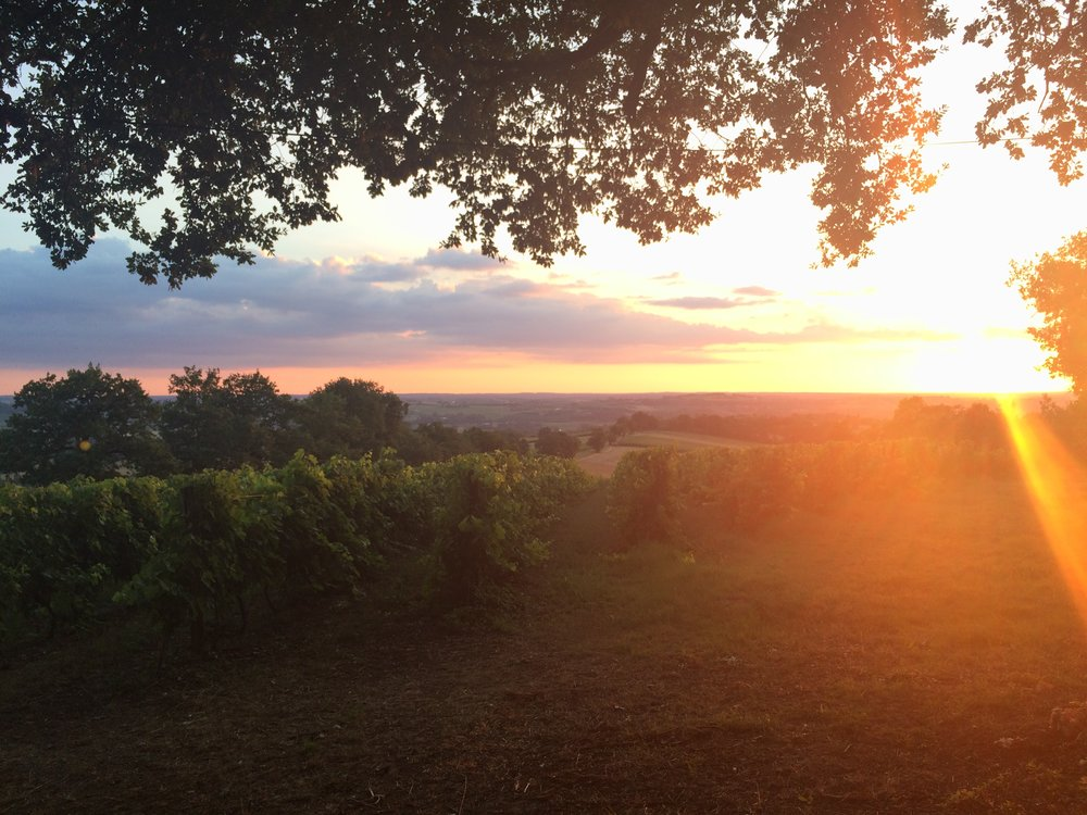 Among the vineyards, watching the sun slowly set.