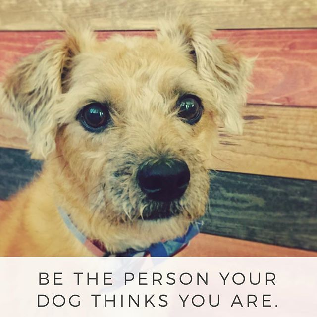Best advice we've heard in a while! #nationaldogday