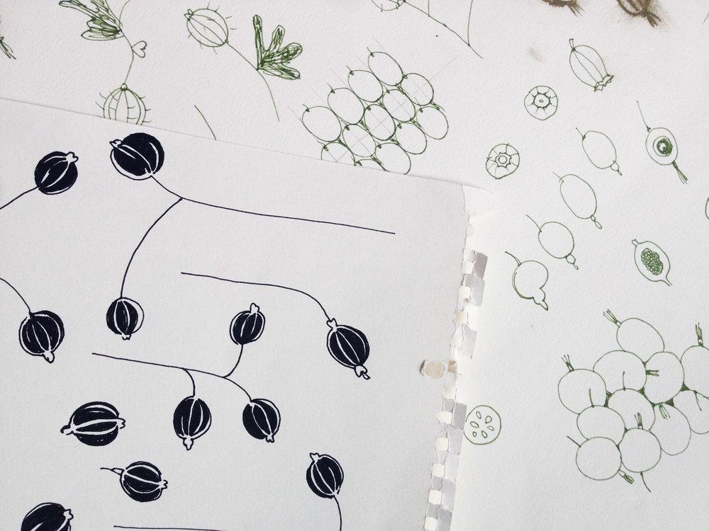 pia_angela_norr_skyr_packaging_design_gooseberries_illustration.jpg