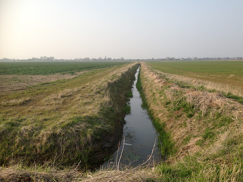 Photo : A drainage ditch within a proposed solar farm site that was surveyed for Water Voles