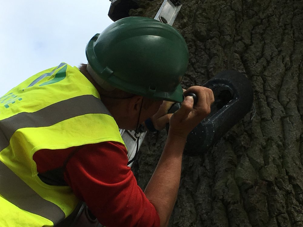 Inspecting bat boxes installed as part of a mitigation scheme