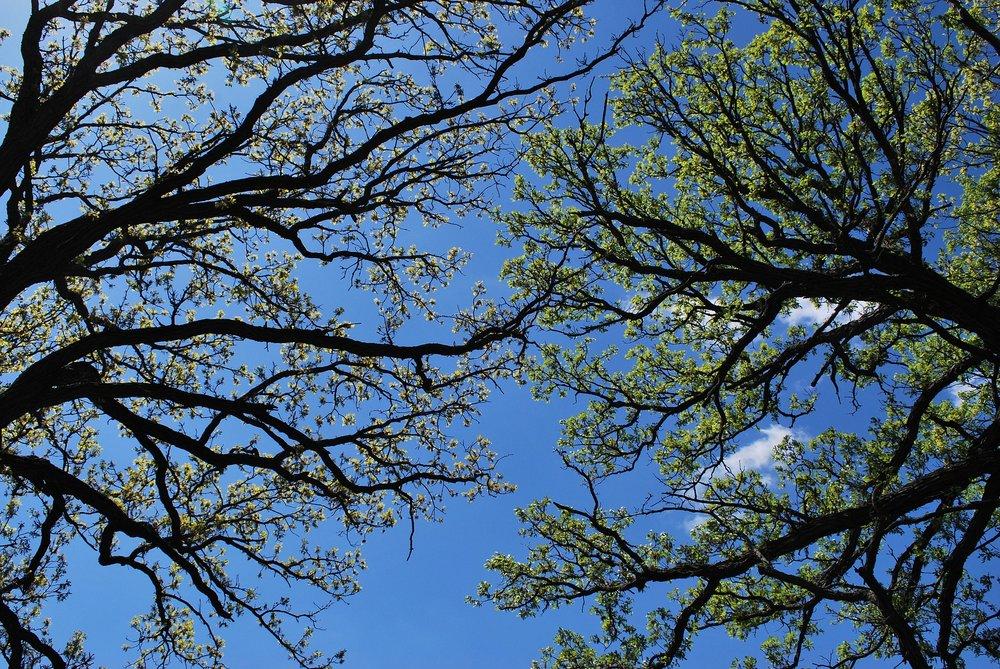 spring-993069_1920.jpg