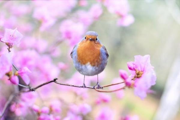 spring_watch.jpg