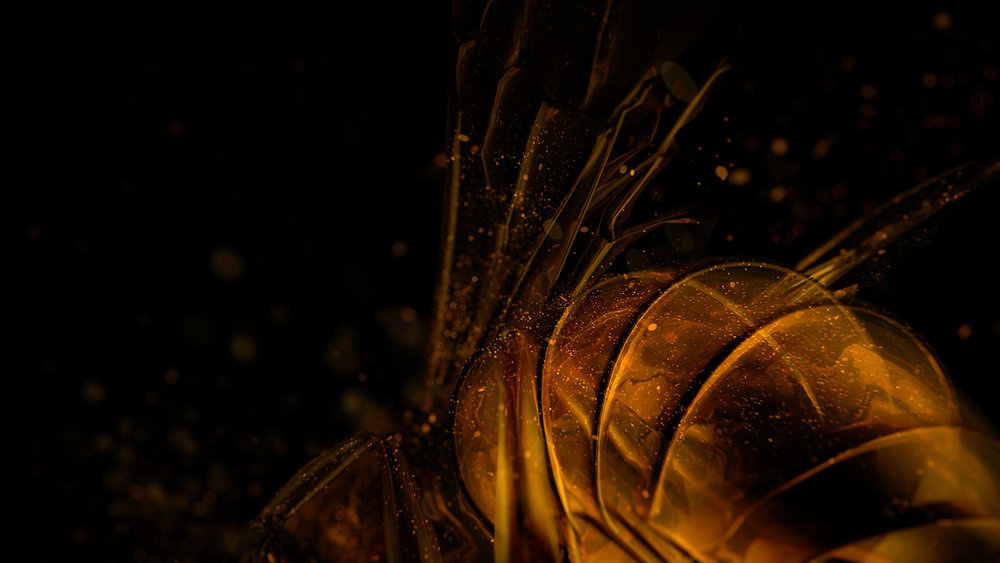 bees_008.jpg