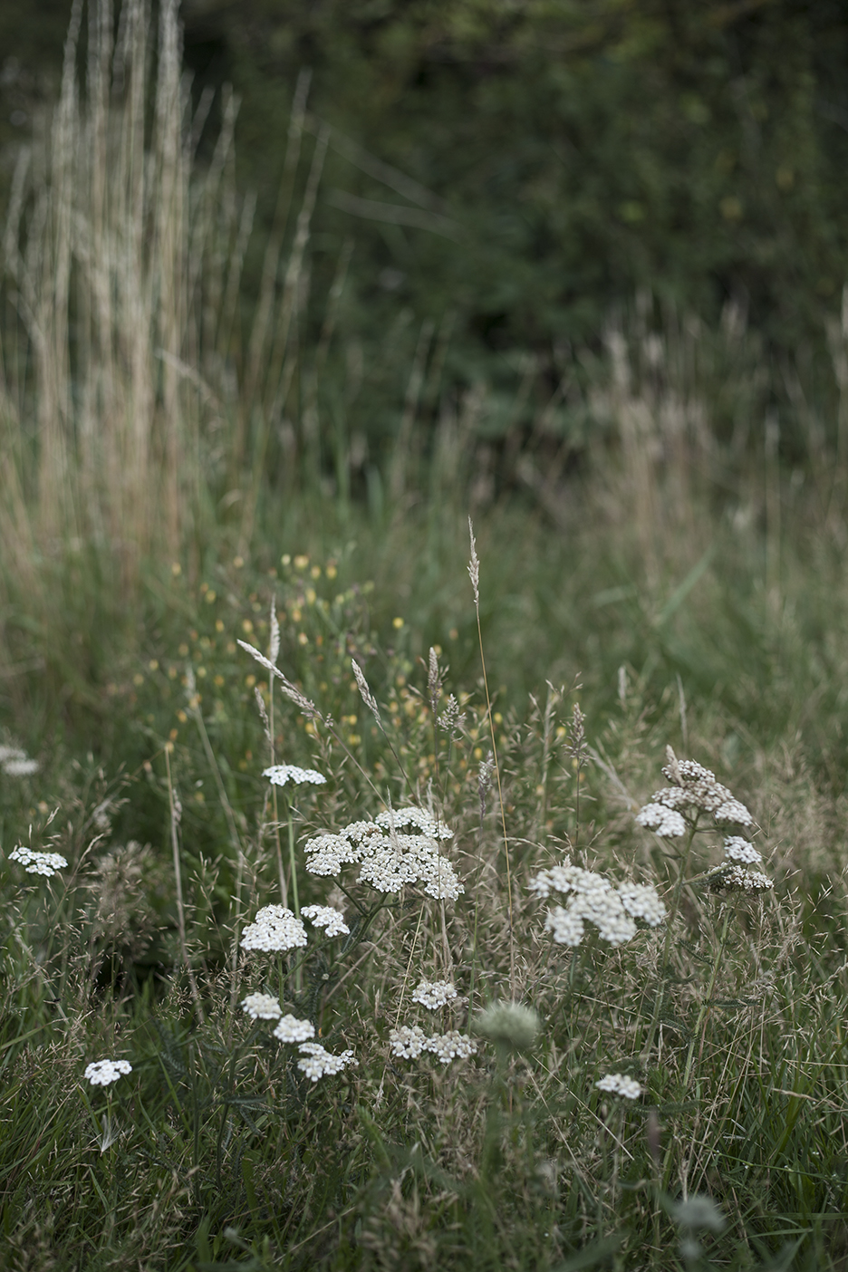 wildgreyskies-crumble-15.jpg