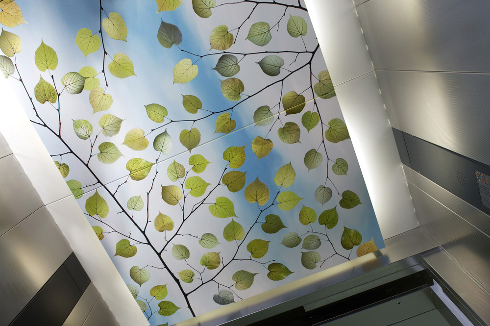 Lime Ceiling.jpg